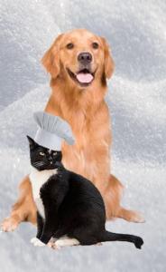 Felix and Oscar copy